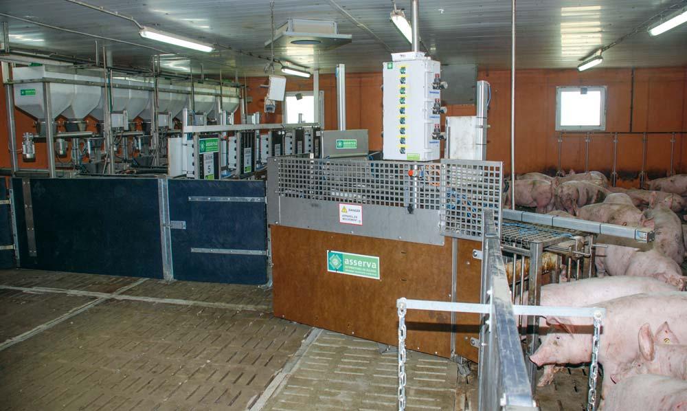 Une salle d'engraissement à la station expérimentale de Romillé (35) équipée de nombreux capteurs.
