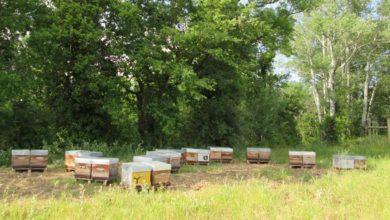 Photo of L'hivernage des colonies d'abeilles