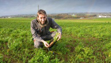 Photo of Pomme de terre : Améliorer sa structure de sol grâce aux couverts