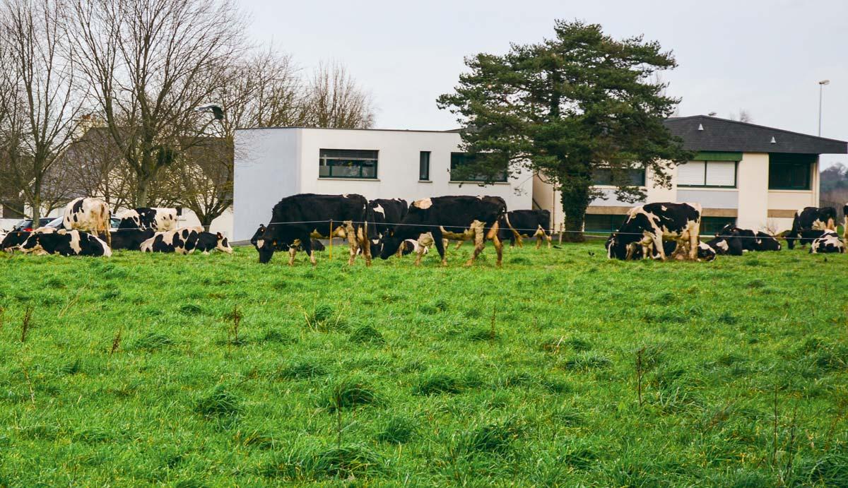 Autour de Rennes, l'agriculture résiste mais rencontre de nombreuses difficultés.