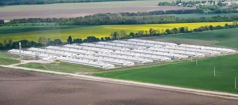 Les sites d'élevage de 16 poulaillers de 120 m de long sur 14 m de large sont très développés en Ukraine. © MHP