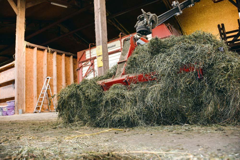 En année défavorable à l'exploitation des pâtures, le foin séché vient en aide au producteur, comme en 2018 où les vaches ont pâturé seulement 90 jours, contre 217 en 2017.