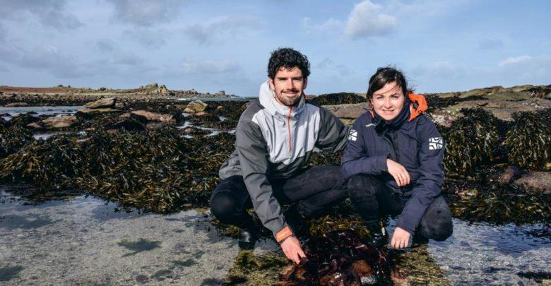 Sébastien Jonas et Célia Jéhanno ont créé Algocea, société spécialisée dans la récolte et le séchage des algues marines ainsi que dans la culture des plantes de bord de mer.