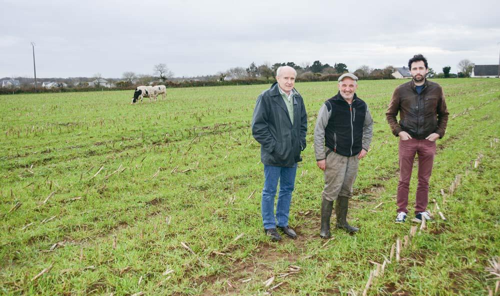 Christophe Bèle, Marc Roudaut et Anthony Momaud, dans une parcelle semée en RGI dans le maïs, et pâturée par les vaches taries.