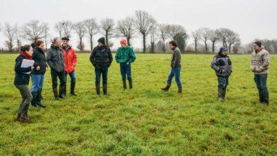 Photo of La ration hivernale équilibrée grâce à l'herbe pâturée