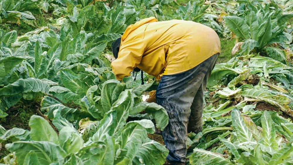 Dans le Léon où la valeur travail est forte se pose aussi le problème de la gestion et de l'organisation de la main-d'œuvre.