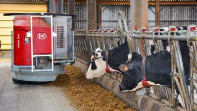Photo of Le robot alimente quotidiennement 200 bovins