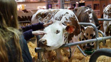 Photo of Un nouveau RDV au Sima 2019 : la journée de l'élevage