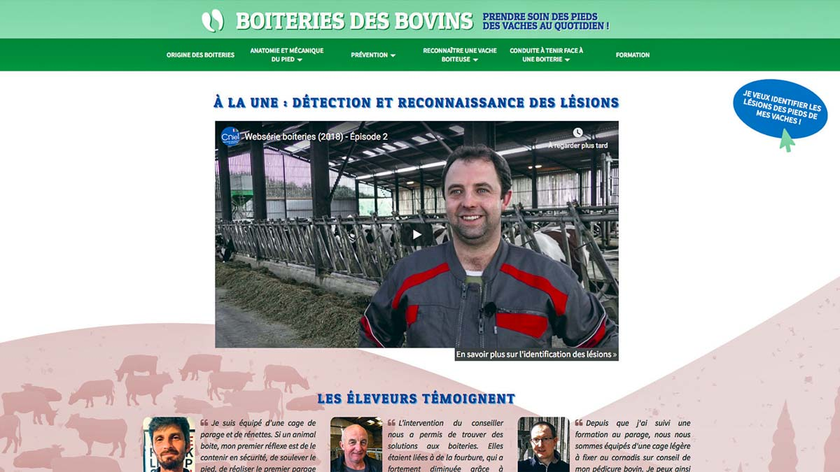 site-boiterie-bovin