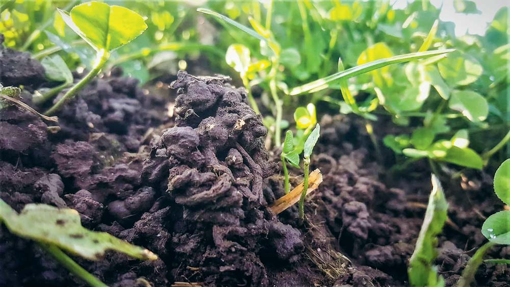 Les vers de terre, regroupés en 3 groupes, se répartissent les tâches à différents niveaux du sol.