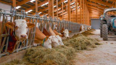 Photo of Coûts de production en hausse en production laitière