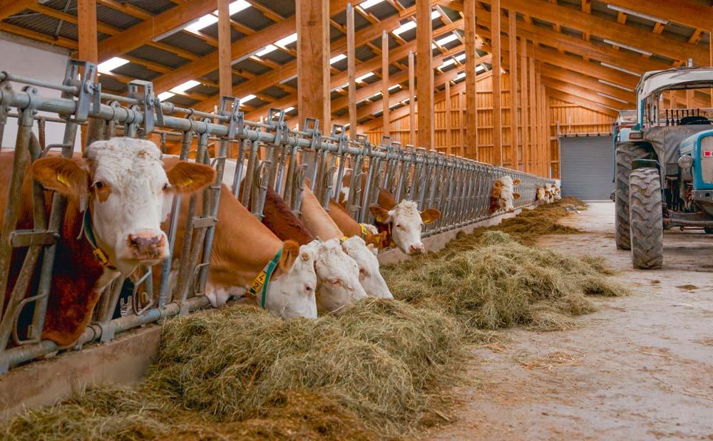 La coût alimentaire en hausse atteint un pic à 98,5 %/1 000 L dans les clôtures comptables de fin d'année.