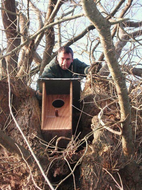 Lionel Hochet place un nid artificiel dans un arbre.