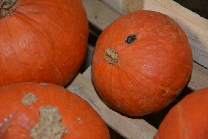 La présence de didymella rend  les fruits non commercialisables.