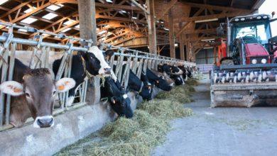 Photo of Des stocks hivernaux de qualité grâce au séchoir en grange