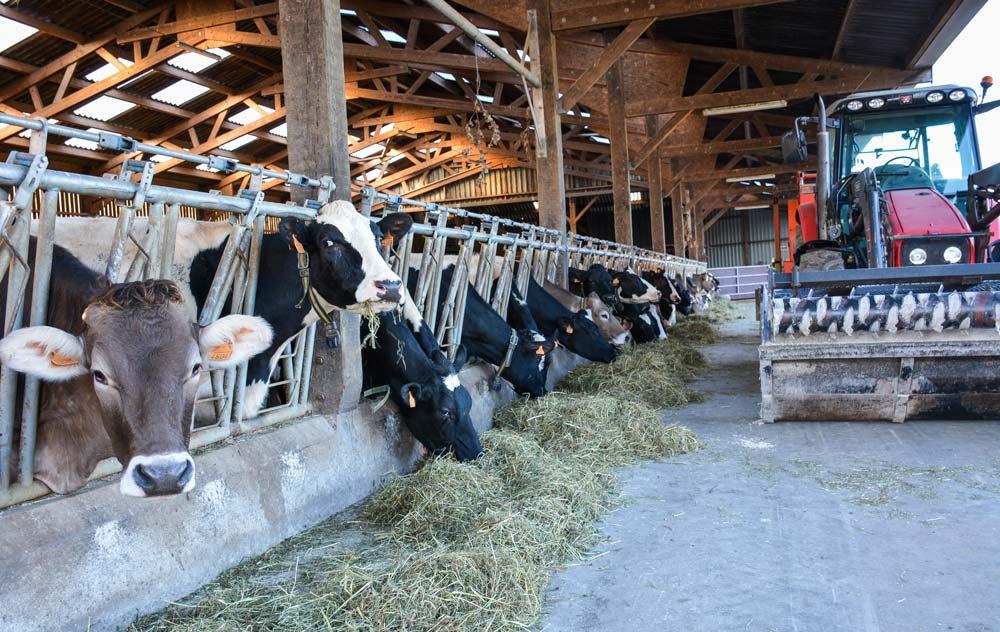 Le séchoir permet d'avoir du fourrage de qualité ce qui a permis de maintenir une production laitière entre 6 000 et 7 000 L/VL.