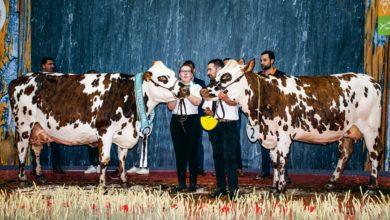 Photo of Normande : Bis repetita pour Hamilton et Djakarta au salon de l'agriculture