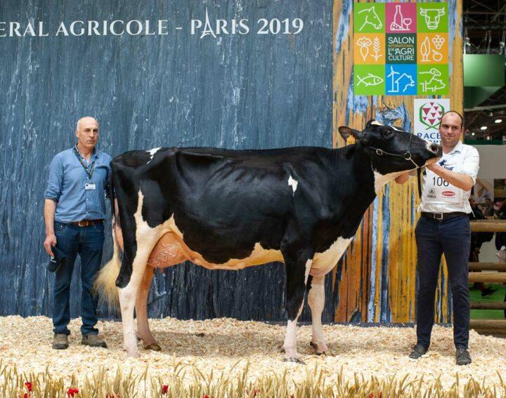 Meilleure mamelle adulte et Premier prix de section chez les 3e lactation, Capjiroise (Atwood x Sanchez) au Gaec Cabon à Plourin (29) a brillé.