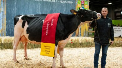 Photo of Prim'Holstein : Harlinda de retour aux affaires