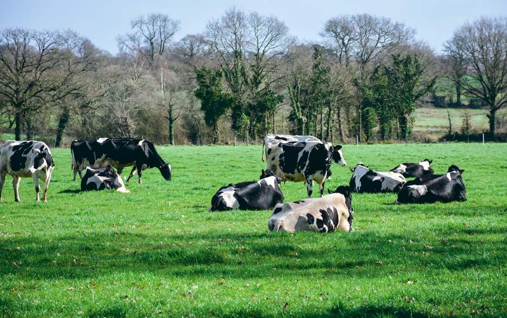 60 hectares, 50 laitières, 1 UTH, un modèle dépassé?