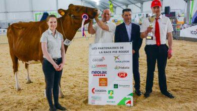 Photo of Pie Rouge à Agrideiz : Luna, étoile du concours