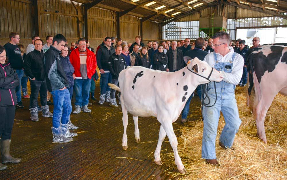 Présentation individuelle des meilleures vaches et génisses.