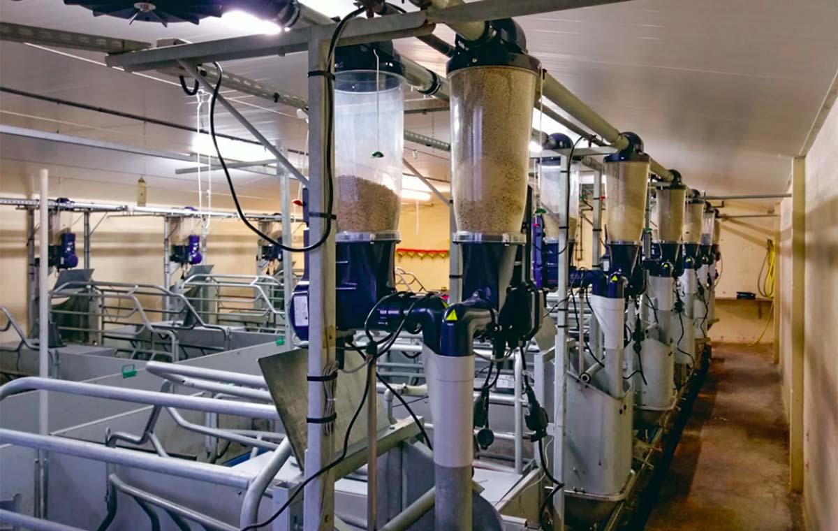 L'Unité expérimentale porcs de Rennes (UEPR) vient d'équiper son élevage d'un nouveau système d'alimentation des truies, dans le cadre d'un programme de recherche. Ce système, à double chaîne, comprend des distributeurs automatiques d'alimentation à sec de précision, connectés, pour les truies. Cette gamme Gestal multi-aliments permet d'ajuster les proportions de deux aliments afin de mieux répondre aux besoins de chaque truie.