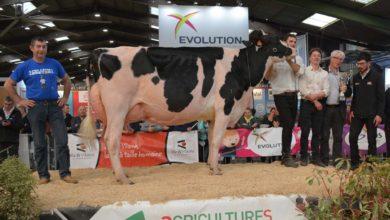 Photo of Foire de Rennes : Heureuse gagnante du Régional Prim'Holstein