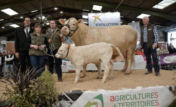 Jupette et sa suite, de l'élevage de Frédéric Fontaine, sur le podium de Rennes.