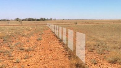 Photo of En Australie, Agersens crée un système de clôtures virtuelles