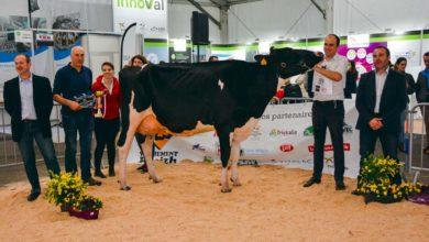 Photo of Prim'Holstein à Agrideiz : Capj Iroise persiste et signe