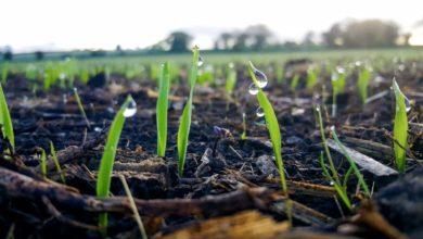 Photo of L'art de semer une pâture pérenne