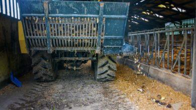 Photo of Garder une auge propre pour les vaches