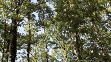 Photo of Prix des bois sur pied : La demande fait bondir l'indice de 8%
