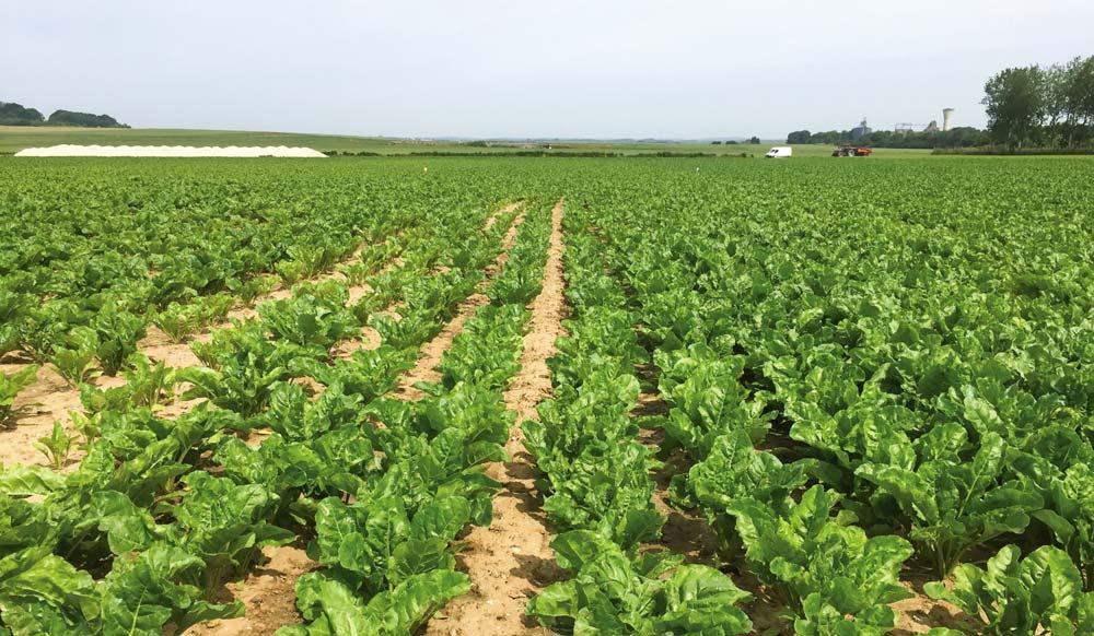 A gauche, une parcelle témoin, comparée à une parcelle implantée en semences activées, à droite.