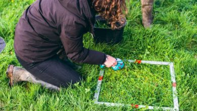 Photo of Suivi de la pousse plus confortable grâce à l'herbomètre électronique