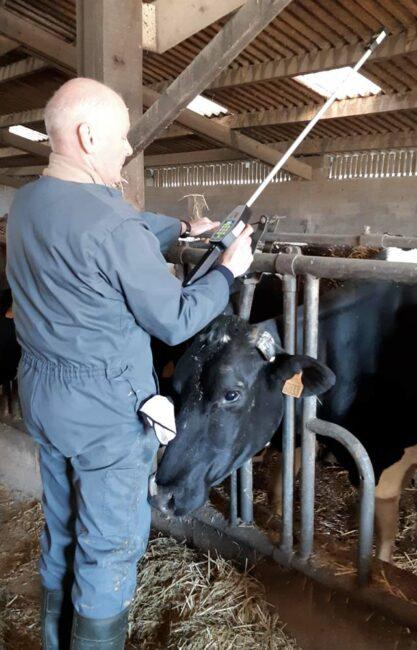 Yvan Girard, technicien Isère Conseil Élevage, mesurant une Nec avec la canne Bodymat.