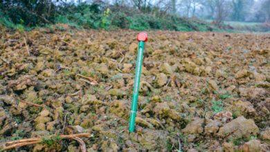 Photo of Maïs : Rien ne presse pour les semis…