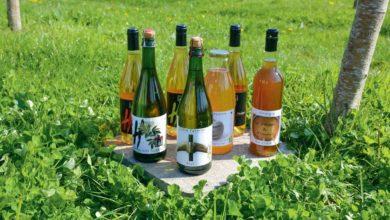 Photo of Des vins de pomme ou de sureau à savourer