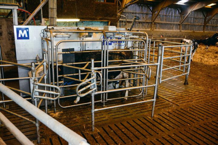 Le 60X est aéré, la vache est libre pendant la traite.