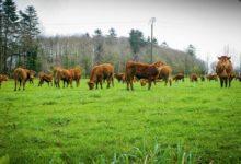 Photo of Les eurodéputés inquiets de l'avenir de la filière viande bovine