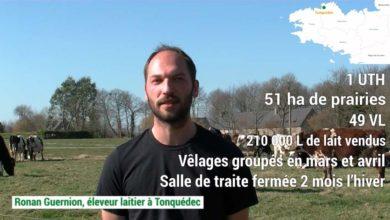 Photo of Le vêlage groupé de printemps en vidéo