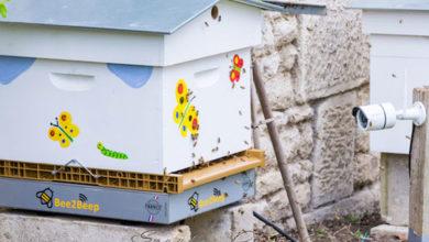 Photo of Bee2beep, la première balance connectée au service des apiculteurs