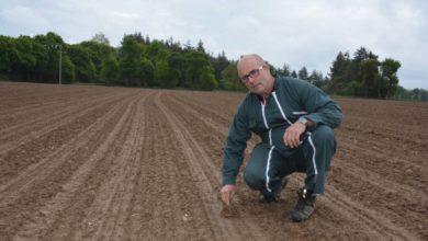 Photo of Désherbage du maïs : De bonnes conditions pour intervenir en prélevée