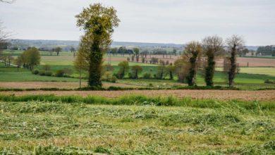 Photo of La biodiversité, un atout pour l'agriculture