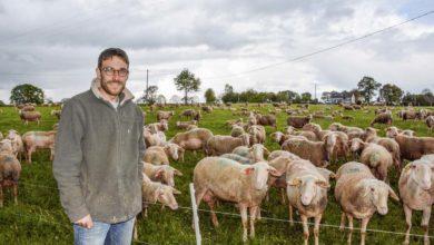 Photo of Il teste le pâturage par blocs en brebis laitières