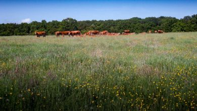 Photo of Prairies : cultivez des bonnes plantes fourragères et rien d'autre