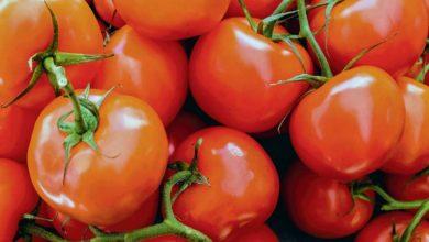 Photo of Tomate : Après un début de campagne difficile, un redressement très net du marché en juin