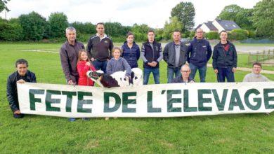 Photo of Fête de l'élevage : 120 bovins en concours