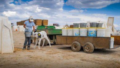 Photo of Marché mondial des produits laitiers : Une Amérique si pragmatique